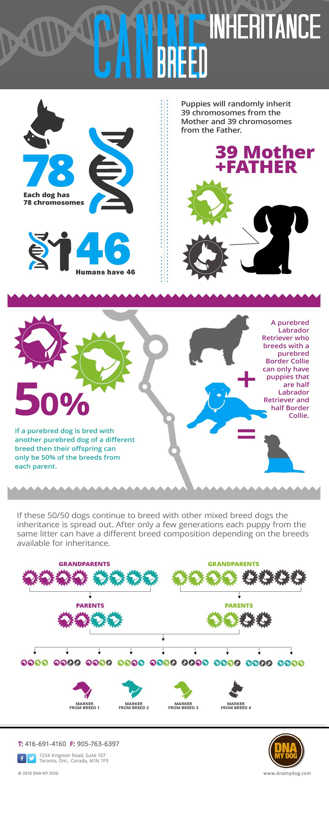 DNA My Dog: Canine DNA test Frequently Asked questions