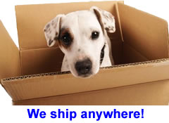 DNA My Dog International Shipping